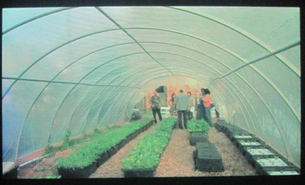 A group of people inside a greenhouse