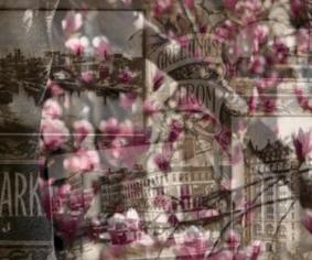 Cherry blossom overlay on photos of vintage Newark landmarks