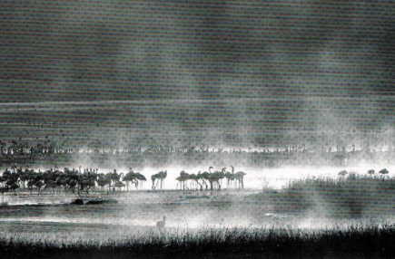 Black and white image of grassy plain with scattered wildlife
